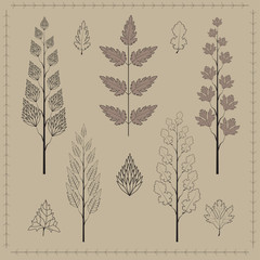 Collection of leaves and branches. Vector set