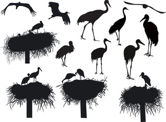 storks and cranes isolated on white