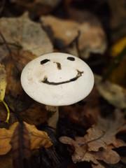 smiley mushroom