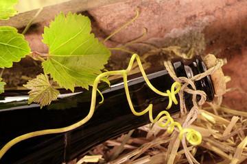 Weinflasche im Tonziegel mit Weinblättern