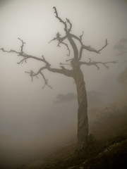 mysterious tree in a dark misty forest