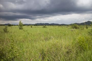 Rain cloud over the green field