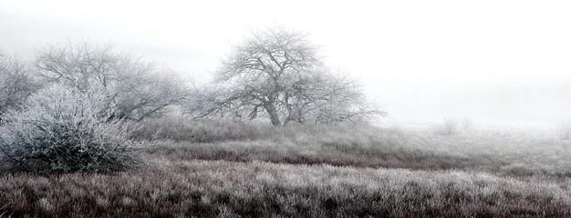 朝霧の立ち込めた湿原の樹木