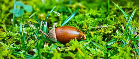 自然の中で芽吹いたドングリ