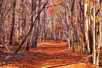 落ち葉の敷き詰められた森の小道