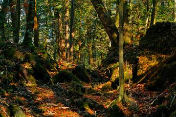 青木が原樹海の森