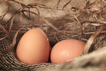 chicken eggs on the farm
