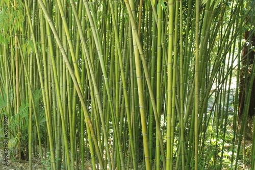 In de dag Bamboo бамбук