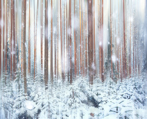 pine forest, winter, snow