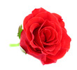 canvas print picture - beautiful rose flower, isolated on white