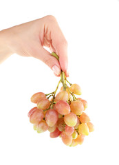 Grape in hand isolated on white