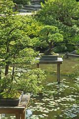 jardin japonais avec bonsais