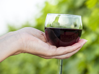 Woman's hand holding glass of red wine in vineyard