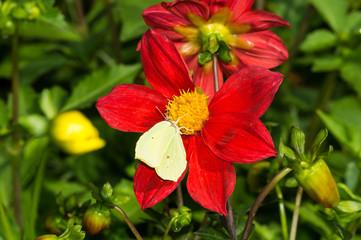 цветок с насекомым