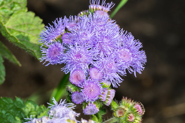 красивые полевые цветы