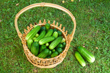 cucumbers on the basket