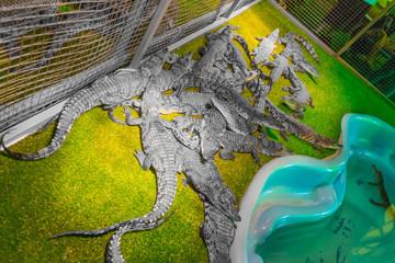Crocodiles in a terrarium