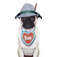 bavarian pug dog
