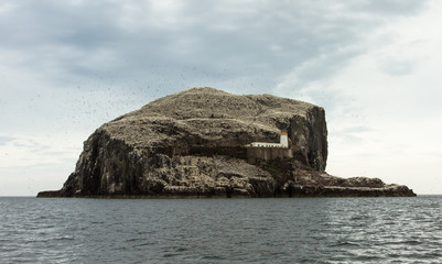 Bass Rock and the Northern Gannets