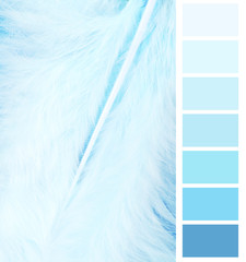feather plumage blue color chart selection for interior