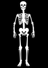 Menschliches Skelett, weiß auf schwarz, Vektor, freigestellt