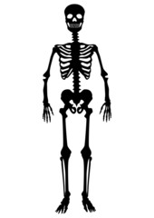 Menschliches Skelett, schwarz, stehend, Vektor, freigestellt