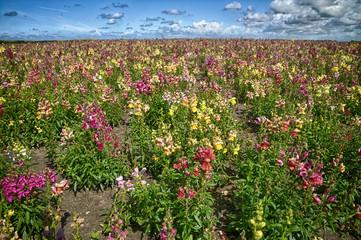wild orchid flower field