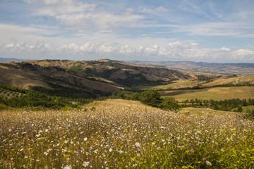 Fioritura estiva in Val d'Orcia, Toscana