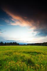 Abendwiese - Blick zum Brocken