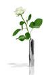 Obrazy na płótnie, fototapety, zdjęcia, fotoobrazy drukowane : White rose in a stylish metal vase