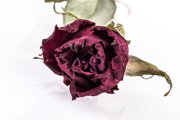 a dried rose on white with reflection