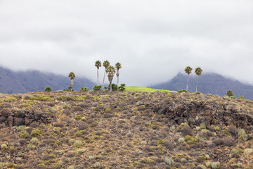 Palm trees on the background of mountains. Spain. Tenerife.
