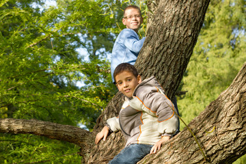 Two  boys on a tree branch on a sunny day