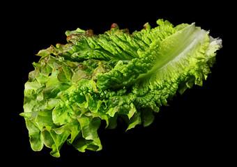 Curly lettuce salad on black