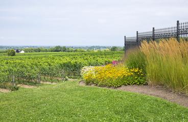 Vineyard Landscape and Garden