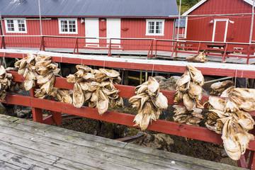 Stockfischköpfe