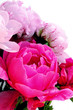 canvas print picture - Three pink peonies