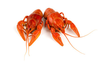boiled crawfish isolated on white