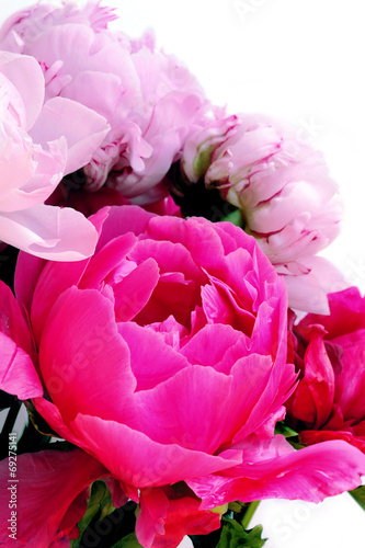 canvas print picture Three pink peonies