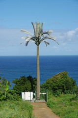 Pylône palmier 1