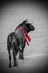 Bull in gray