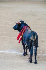 Bull in the bullfight