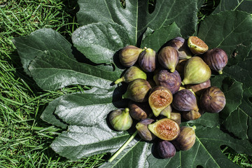 Figs on green leaf