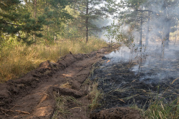 Fire barrier strip in the forest