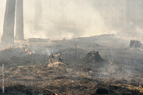 Charred trunks of trees in a forest after a fire - 69279990