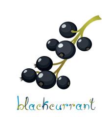 Black Currant Berry