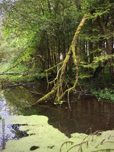 canvas print picture Sumpf im Wald