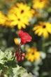 Obrazy na płótnie, fototapety, zdjęcia, fotoobrazy drukowane : Fleur de jardin