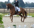 Pferdesport Kür Turnier Dressur - 69283703