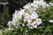 Obrazy na płótnie, fototapety, zdjęcia, fotoobrazy drukowane : Fleurs de jardin